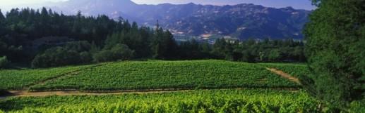diamond mountain vineyard