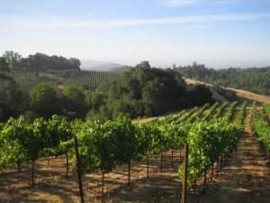 Windsor Oaks Vineyards